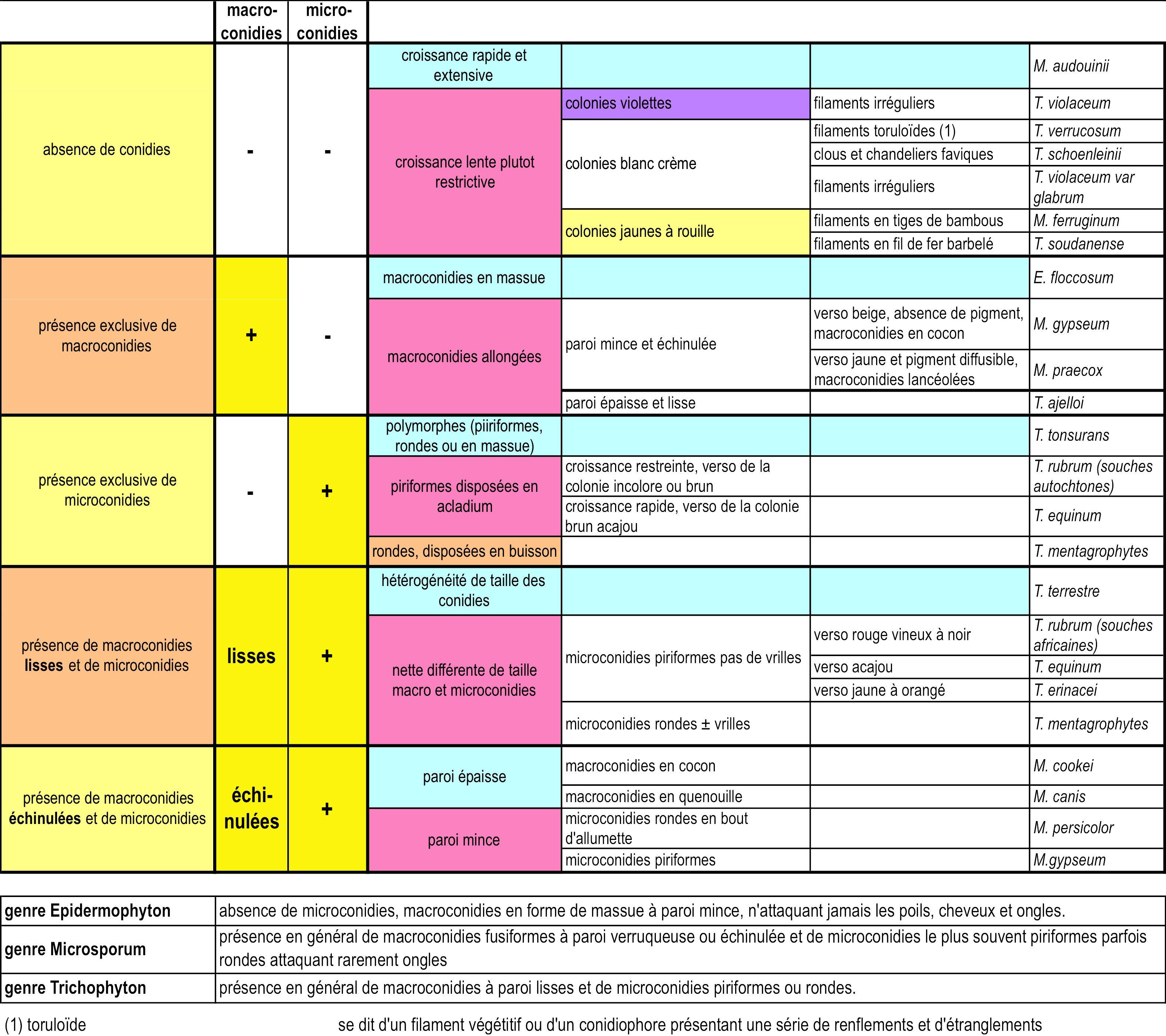 Identifier des dermatophytes for Bureau tableau 2 en 1